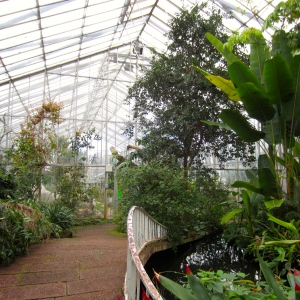 RBG Glasshouses