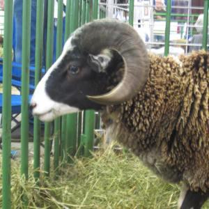 BSG 2013 such a handsome ram